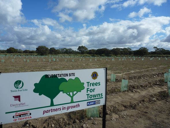 Schools Tree Day - Trees for Towns Berri 2012 © Stephen Rodley