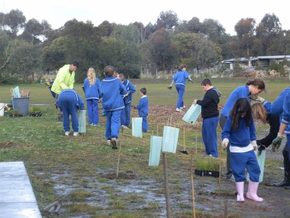 Teesdale PS Tree Planting Day; our fourth year! © Polly Musgrove