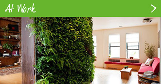 Get a Vertical Garden at Work