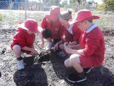 Wellstead students planting