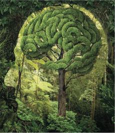 Growing Head (NTD Every Day Nature Webinar 2014) © Slade Smith
