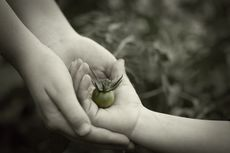 Tree Day Hands Tomato Sharing Nature © Planet Ark