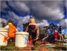 Tree Day provides an exceptional way to engage the community and recruit new volunteers © Planet Ark