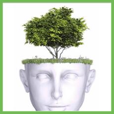 Tree Brain © Planet Ark