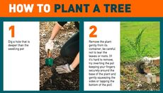 How to Plant Poster © Planet Ark