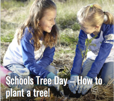 Schools Tree Day lesson plans