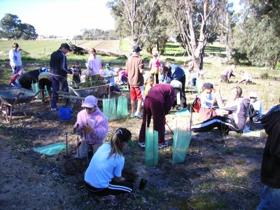 Forestry media studies in australia