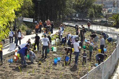 City of Sydney & Planet Ark community planting © Planet Ark