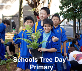 Schools Tree Day lesson plans Primary Unit