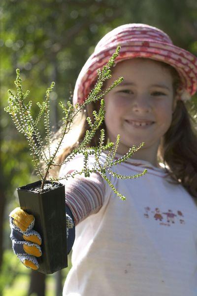 school seedlings © Planet Ark