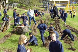 Bentleigh students planted to create shade and leaf littler for local skinks to live in. © Bentleigh West Public School